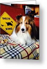Sheltie Crossing Greeting Card