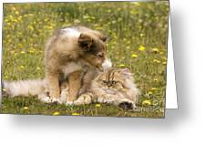 Sheltie Puppy And Persian Cat Greeting Card