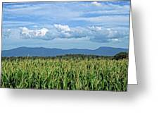 Shenandoah Corn  Greeting Card