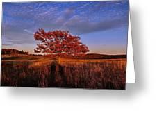 Shenandoah Tree Greeting Card