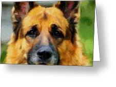 Shep  - German Shepherd Greeting Card