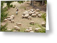 Shepherd With Sheep Greeting Card