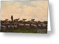 Shepherd With Sheep Standard Size Greeting Card