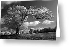 Shepton Tree Greeting Card
