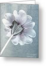 Sheradised Primula Greeting Card by John Edwards