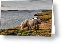 Shetland Pony At Shore  Shetland Greeting Card