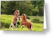 Shetland Pony's Greeting Card