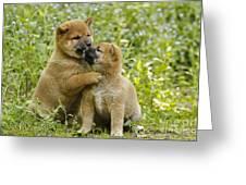 Shiba Inu Puppies Greeting Card