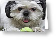 Shih Tsu And Ball Greeting Card