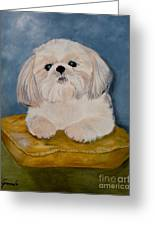 Shihtzu Greeting Card