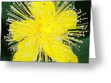 Shimmer Yellow Flower Greeting Card