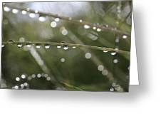 Shimmering Rain Drops In A Meadow Greeting Card