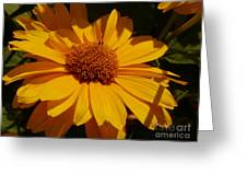 Shine On Me Greeting Card
