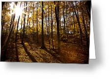 Shining Sun In The Woods Greeting Card