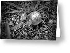 Shiny Mushroom Greeting Card