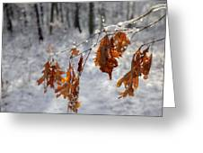 Shivering Oak Leaves Greeting Card