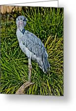 Shoebill Stork Greeting Card