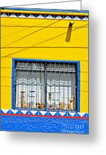 Shop Window - Mexico - Photograph By David Perry Lawrence Greeting Card