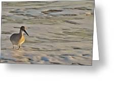 Shore Bird 7 12/5 Greeting Card