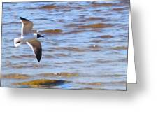 Shore Bird Greeting Card