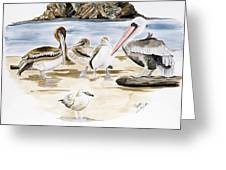 Shore Birds Greeting Card