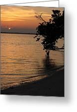 Shore Of The River Greeting Card