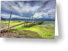 Shore Vegetation Greeting Card by Mario Legaspi