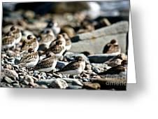 Shorebird Rest Time Greeting Card