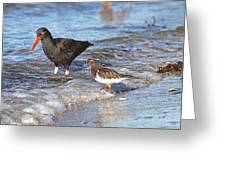 Shorebirds And Breaking Wave Greeting Card