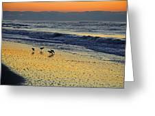 Shorebirds At Dawn Greeting Card
