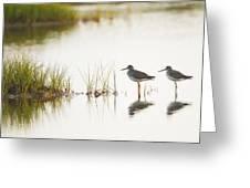 Shorebirds At Dusk Greeting Card