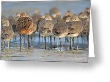 Shorebirds At Flamingo Bay Greeting Card