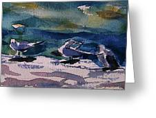 Shoreline Birds Iv Greeting Card