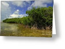 Shoreline Greeting Card