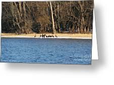 Shoreline Meeting Greeting Card
