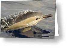Short-beaked Common Dolphin Azores Greeting Card by Malcolm Schuyl