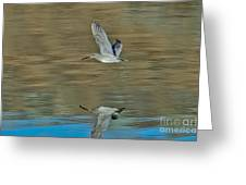 Short-billed Dowitcher And Reflection Greeting Card