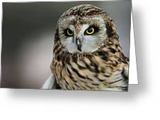 Short Eared Owl Portrait Greeting Card