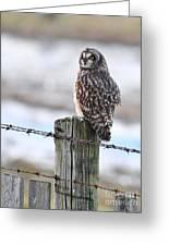 Short Eared Owl Greeting Card