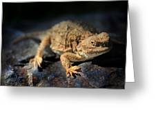 Short Horned Lizard Greeting Card