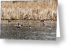 Shoveler Landing Greeting Card