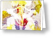 Show Girl Hibiscus Greeting Card