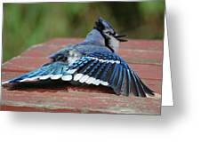 Show-off Greeting Card