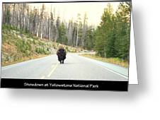 Showdown At Yellowstone Greeting Card