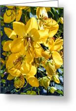 Shower Tree 9 Greeting Card