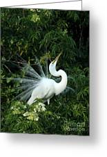 Showy Great White Egret Greeting Card