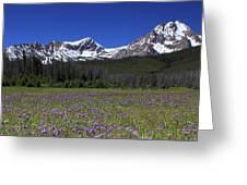 Showy Penstemon Wildflowers Sawtooth Mountains Greeting Card