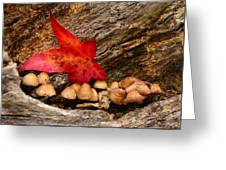 Shrooms Greeting Card by Jacqui Collett
