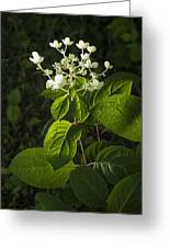 Shrub With White Blossoms Greeting Card