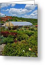 Shrubbery At A Greenhouse Greeting Card